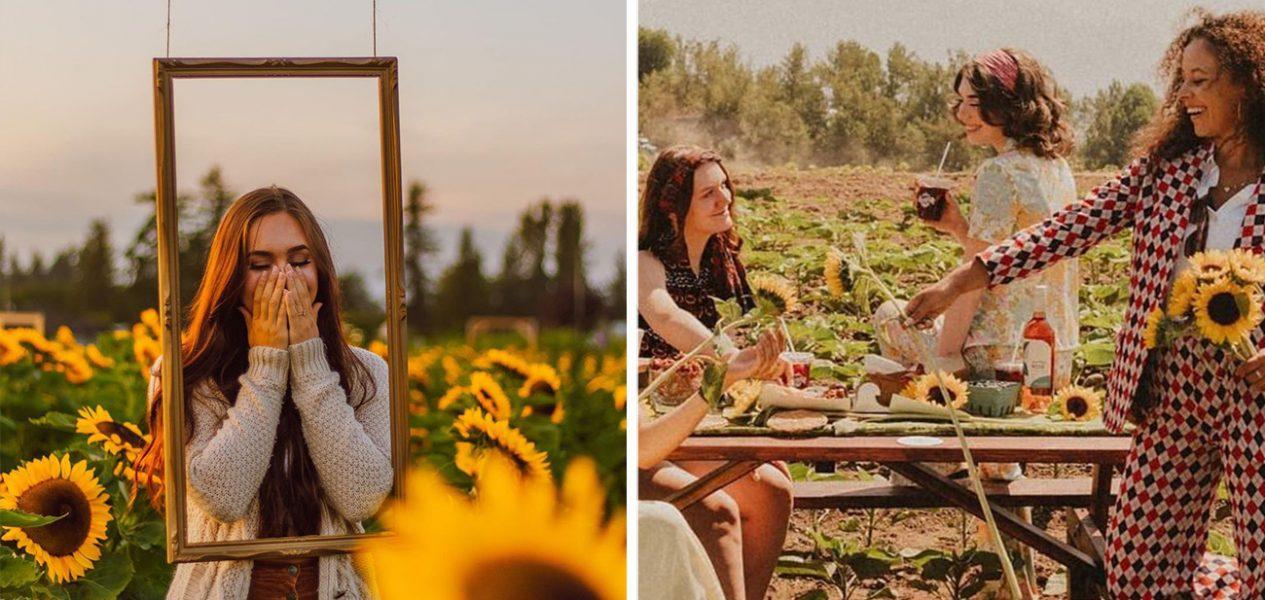 abbotsford sunflower festival maan farms