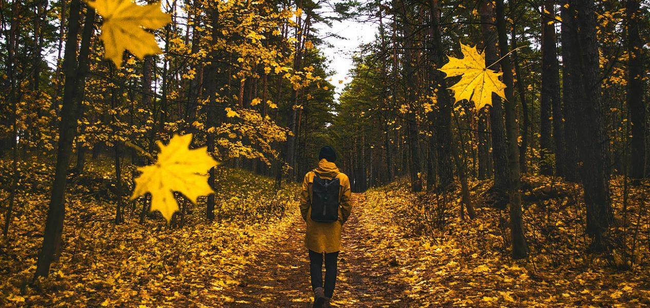 canada fall forecast