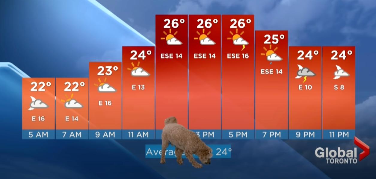 dog crashes weather report