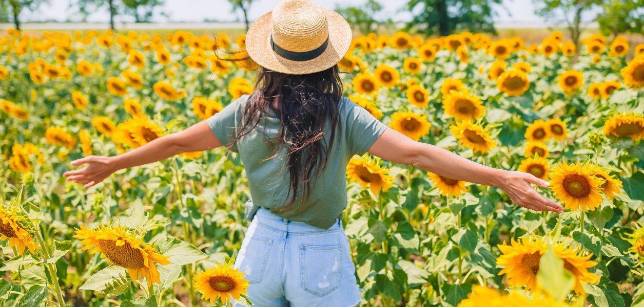 alberta sunflower fields