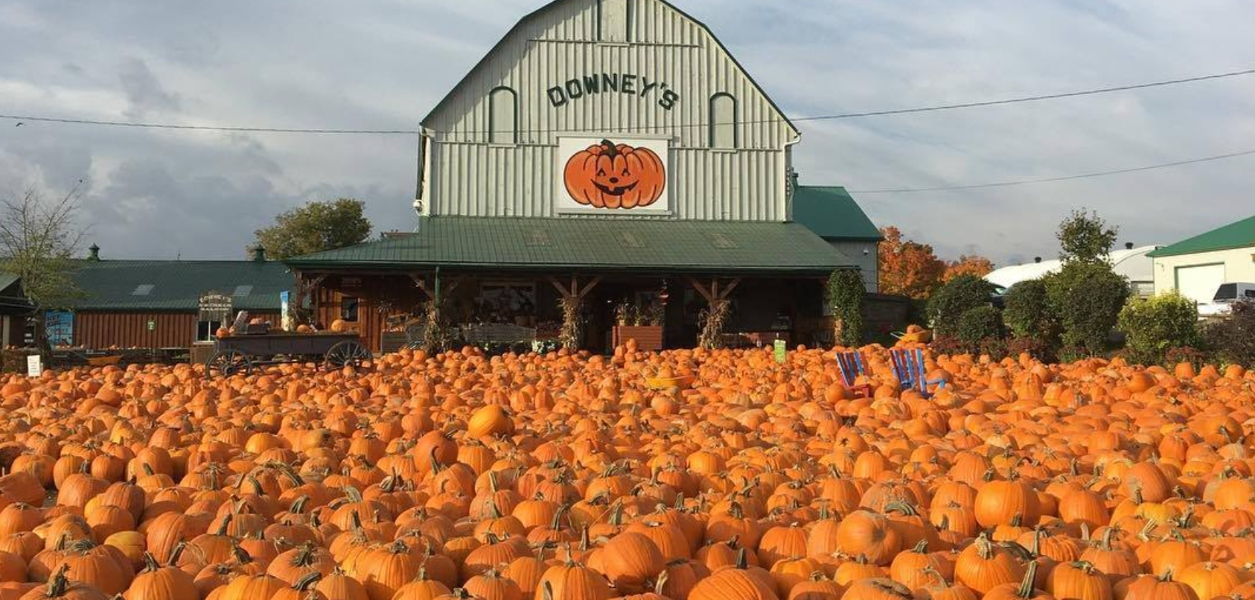 downeys farm pumpkins