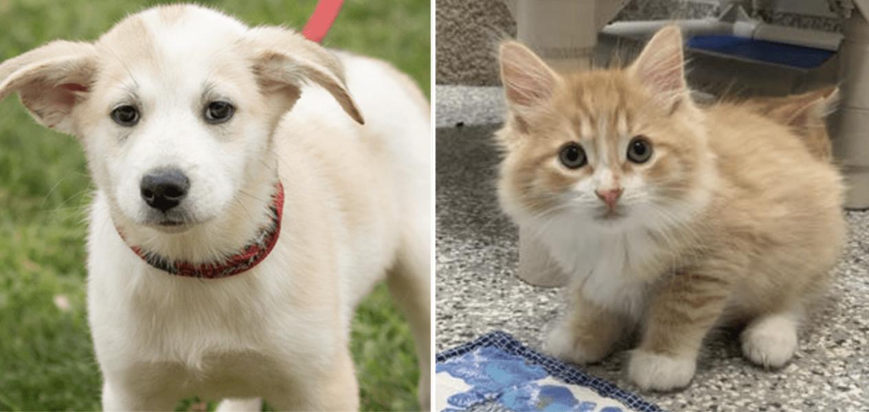 puppies for adoption ontario