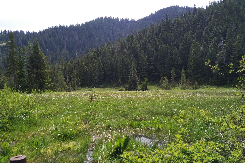 bog cypress mountain