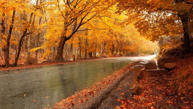 best fall drives in ontario