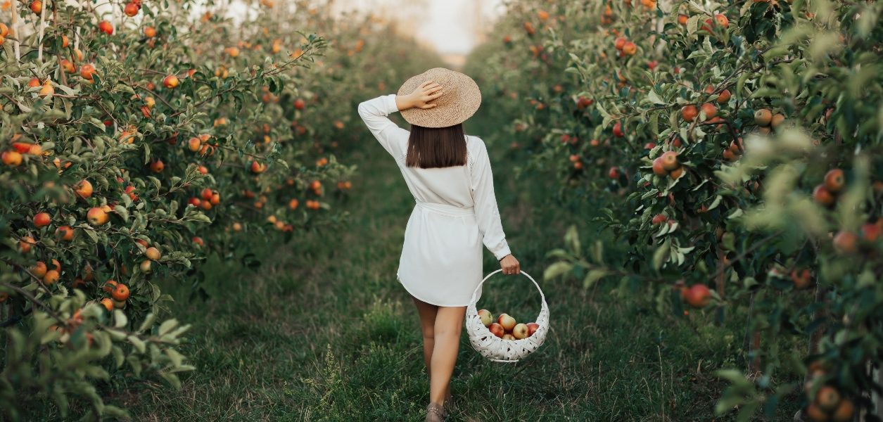 apple picking in alberta