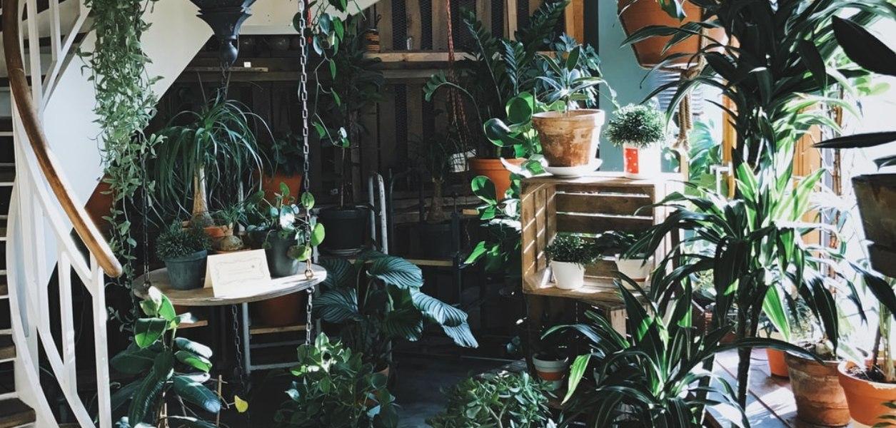 plant sale toronto