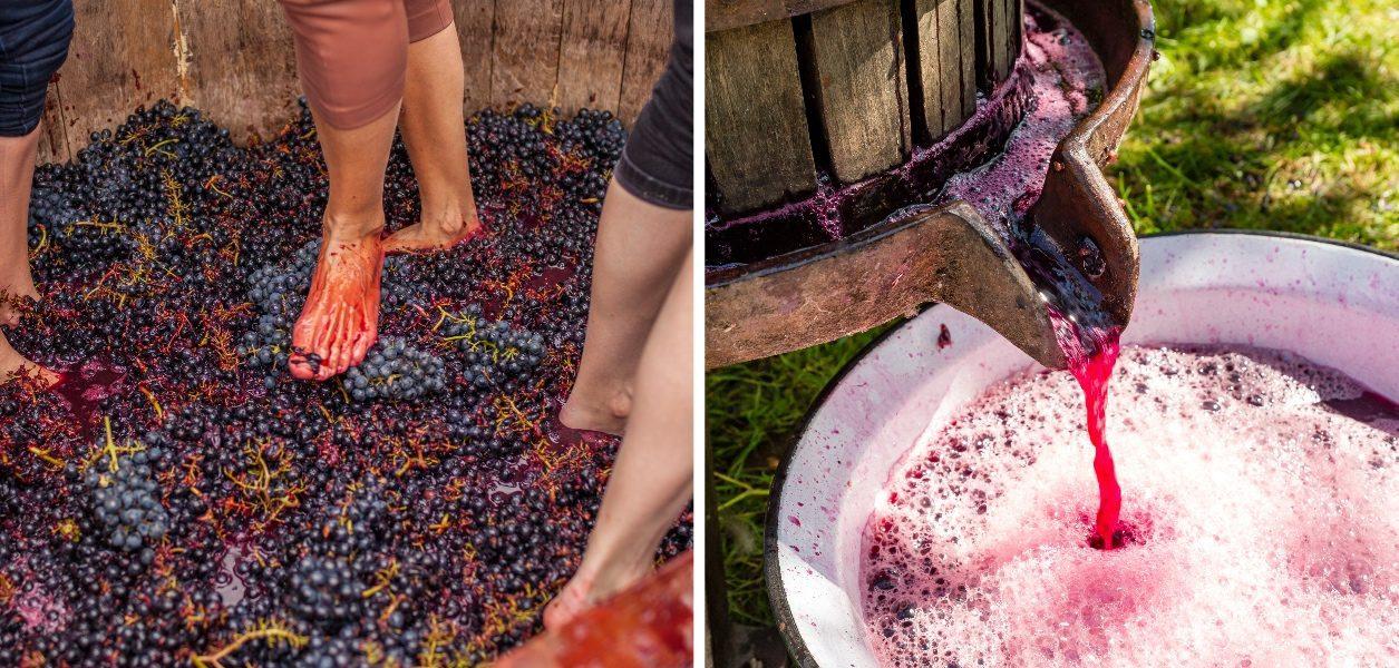 grape stomps in Washington
