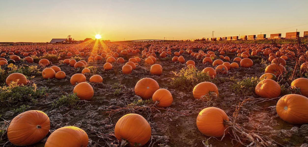 pumpkin patches near seattle