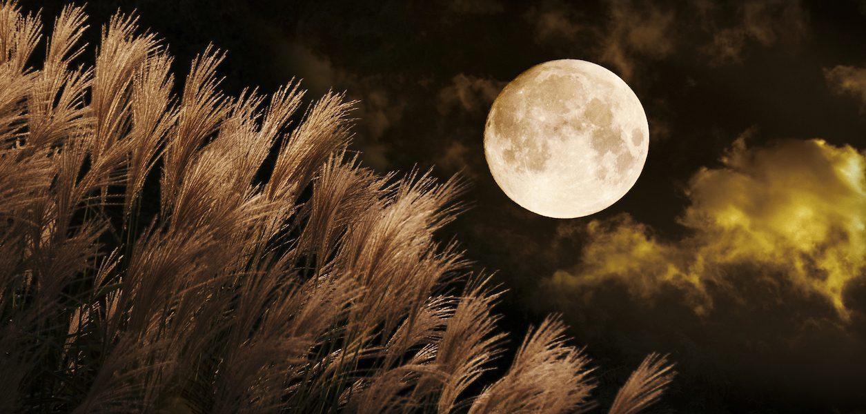 full harvest moon seattle