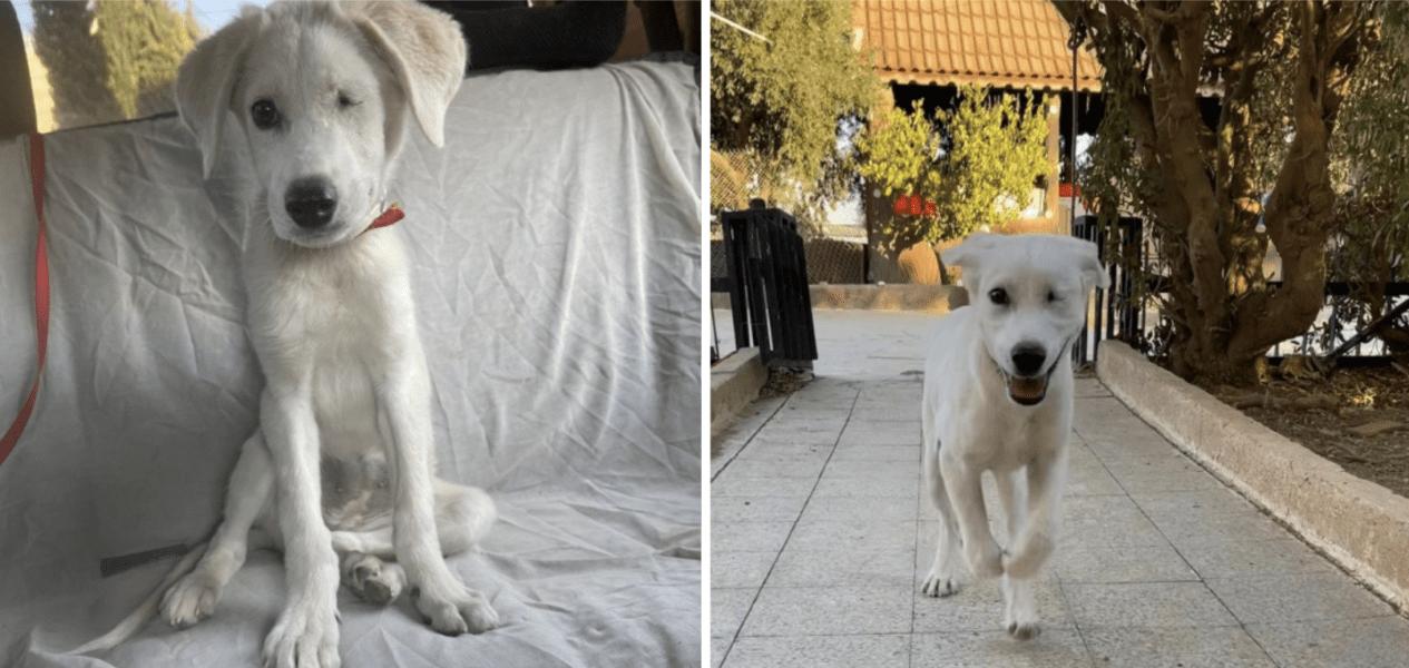 puppy for adoption toronto