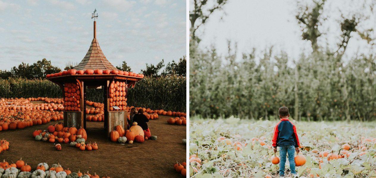 pumpkin patches vancouver